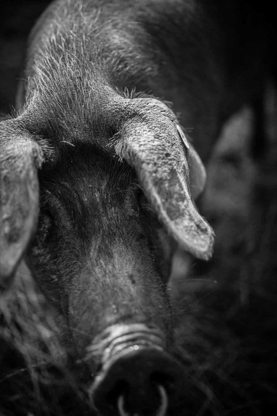 Le Porc Gascon